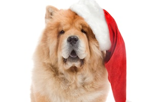 blog 5 Profound Lessons Dogs Can Teach Us About Happiness This Holiday